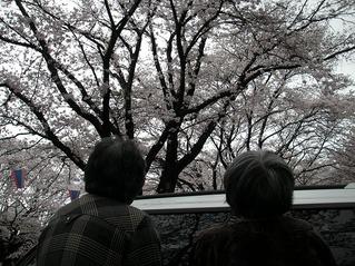 花見 GH.jpg